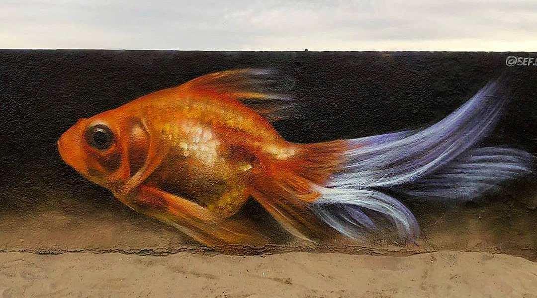Sef @ Venice Beach, Los Angeles, USA