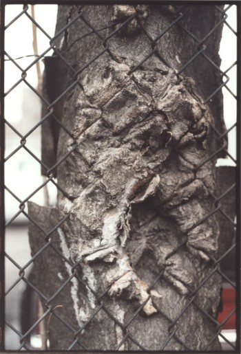 Zoe Leonard, Untitled, 2000