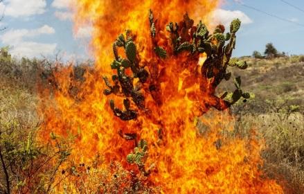 Burning Bush, Oaxaca de Juárez, 2018 © Pieter Hugo