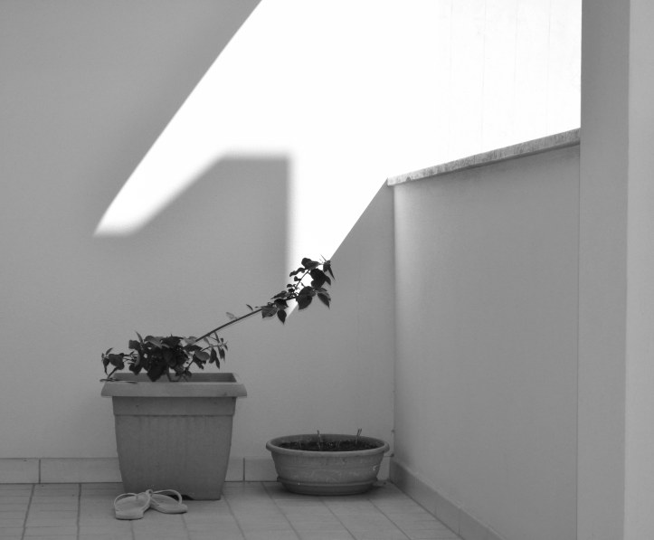 Casa amara casa - Foografia di Barbara Picci