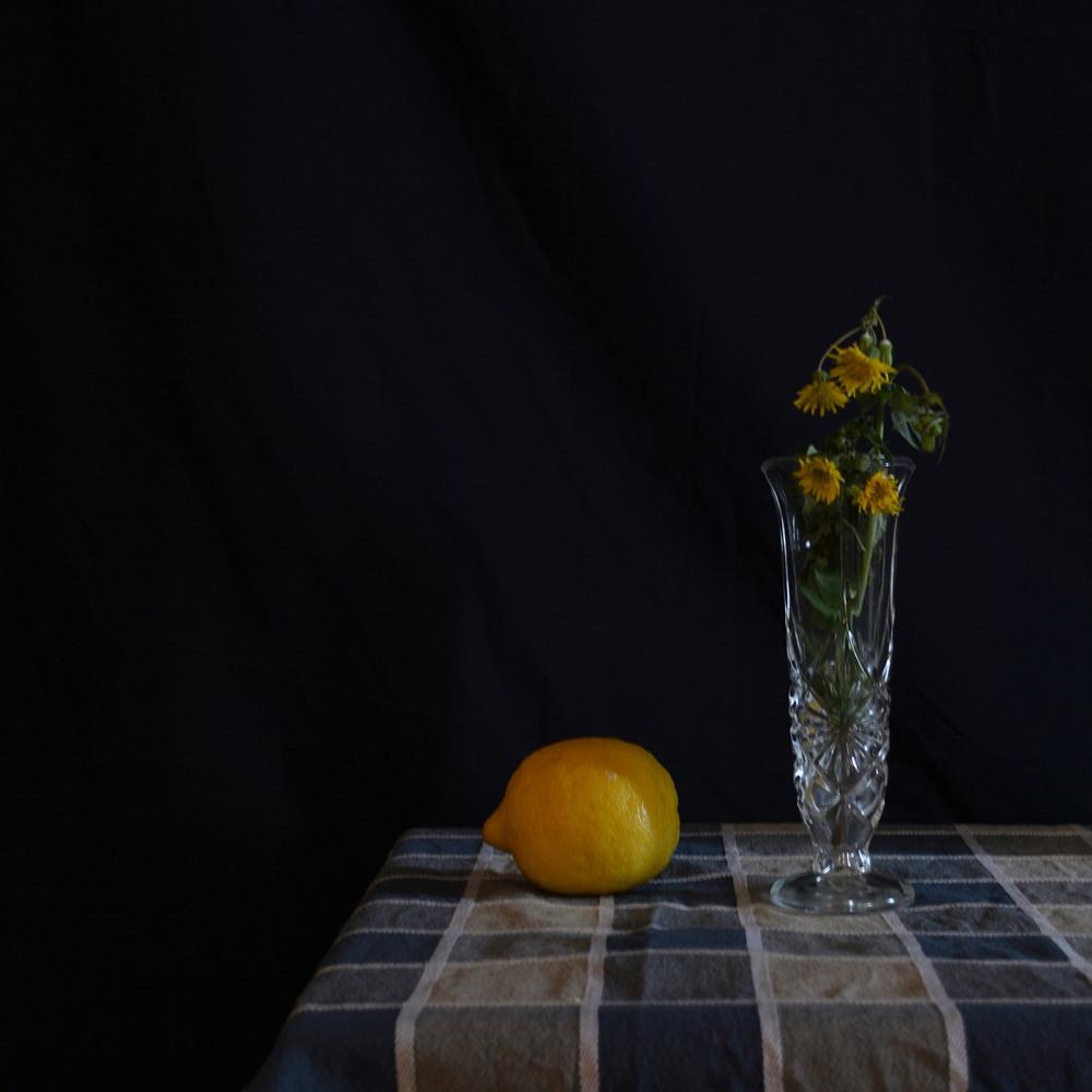 Natura sola - Solitudini affini. Fotografia di Barbara Picci