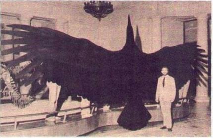 Il più grande uccello mai scoperto, l'Argentavis magnificens