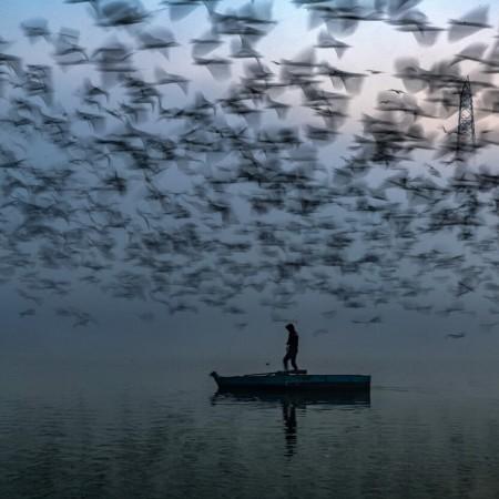 Long Live the River by Sankar Sridhar