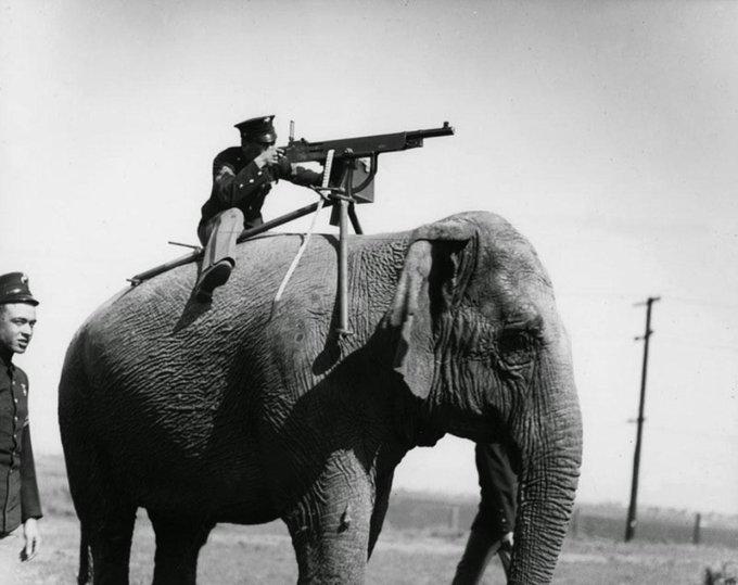 Mitragliatrice montata su elefante, 1914