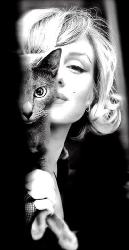 Marilyn Monroe con un gatto, 1953