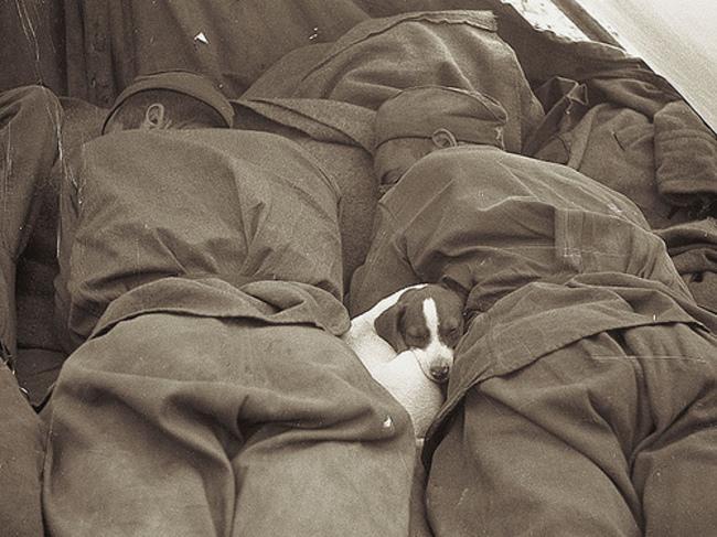 Un cucciolo che dorme comodamente tra i soldati russi. 1945