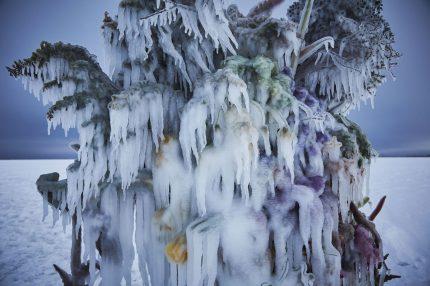 Frozen Flowers by Azuma Makoto