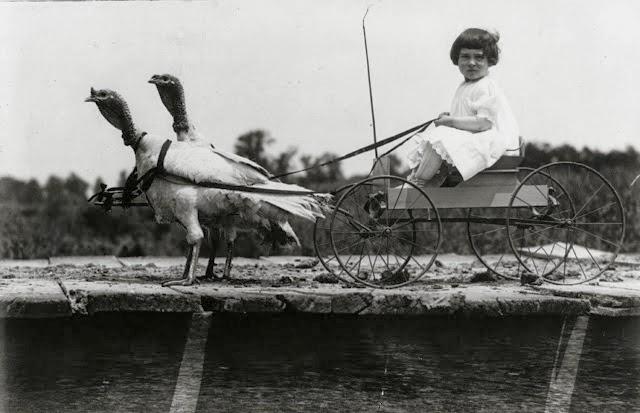 9 agosto 1909: una bambina guida un carretto trainato da due tacchini