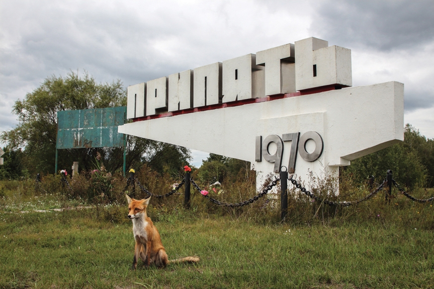A tame fox poses in front of the sign pointing the way to Pripyat from the Chernobyl Nuclear Power Plant. Chernobyl Exclusion Zone by Darmon Richter