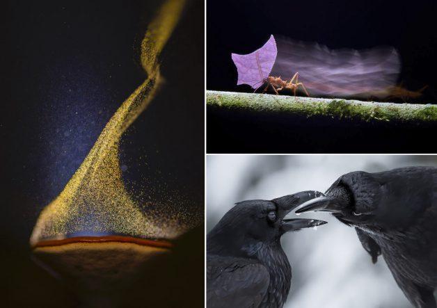 "A sinistra: ""Rain Dance"" di Sarang Naik. In alto a destra: ""Running Atta"" di Petr Bambousek. In basso a destra: ""Beak to Beak"" di Shane Kalyn"