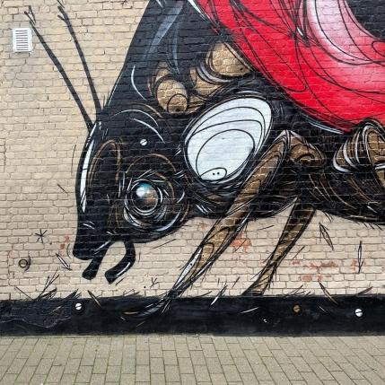 Dzia @ Dendermonde, Belgium