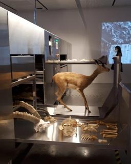 Padiglione Israele alla Biennale Architettura 2021